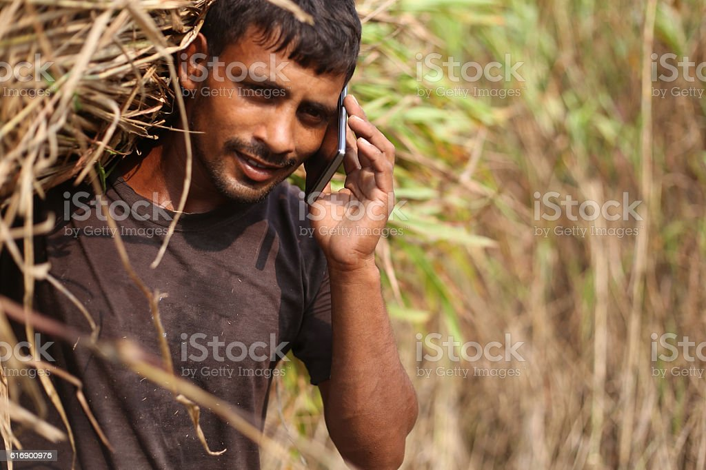 Farmer carrying silage and talking on phone stock photo