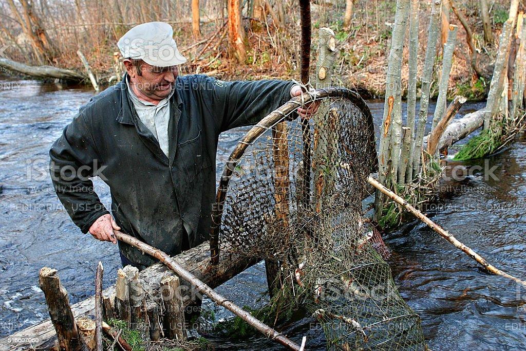 Farmer catch fish in river using hoop net fishing traps. stock photo