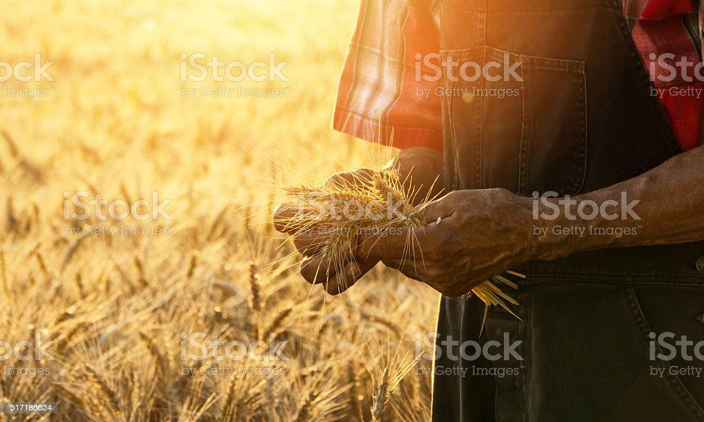 Farmer checking his crops-copy space stock photo