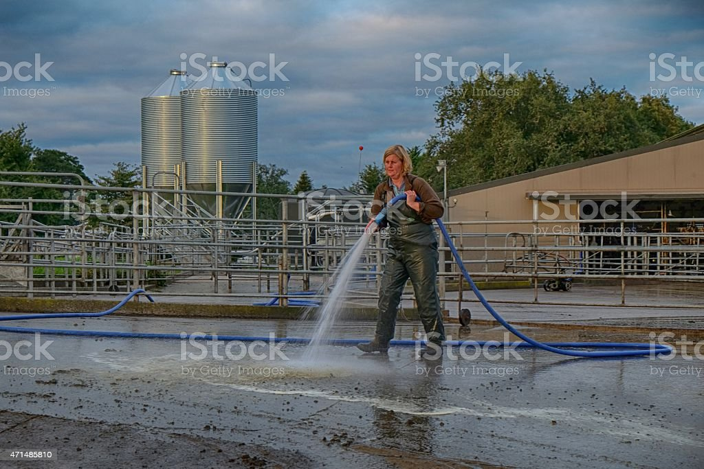 Farmer cleaning concrete pad by cowshed with hose. stock photo