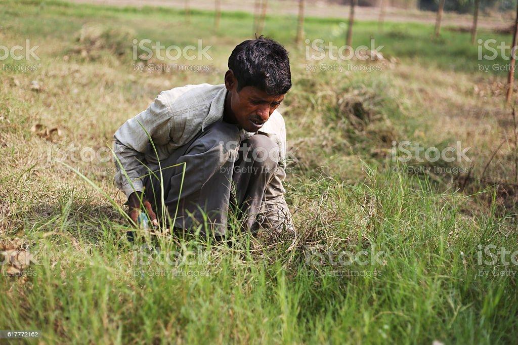 Farmer cutting grass by using scythe stock photo