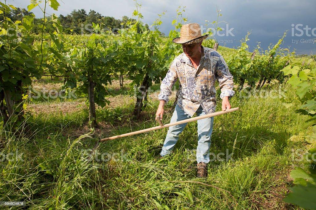 Farmer Cutting Grass stock photo