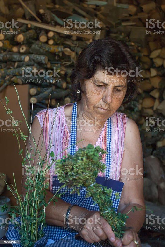 Farmer cutting sprigs of oregano and tying them into bundles. foto royalty-free