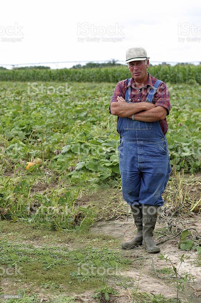 Farmer Dan in the pumpkin patch stock photo