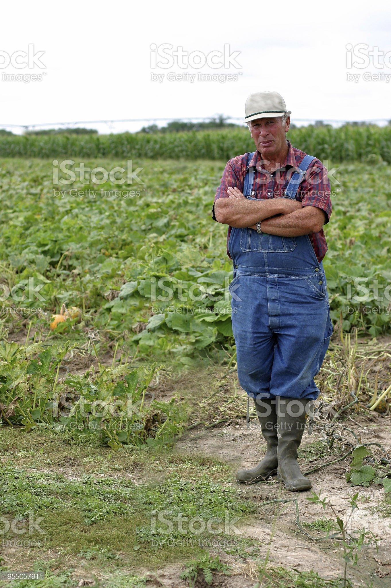 Farmer Dan in the pumpkin patch royalty-free stock photo
