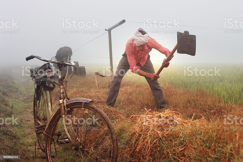 Farmer Digging In The Field stock photo