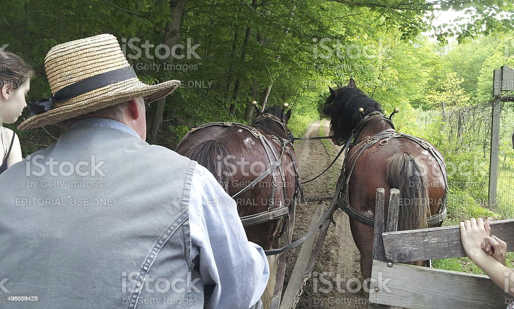 Farmer driving the horse-powered carriage stock photo