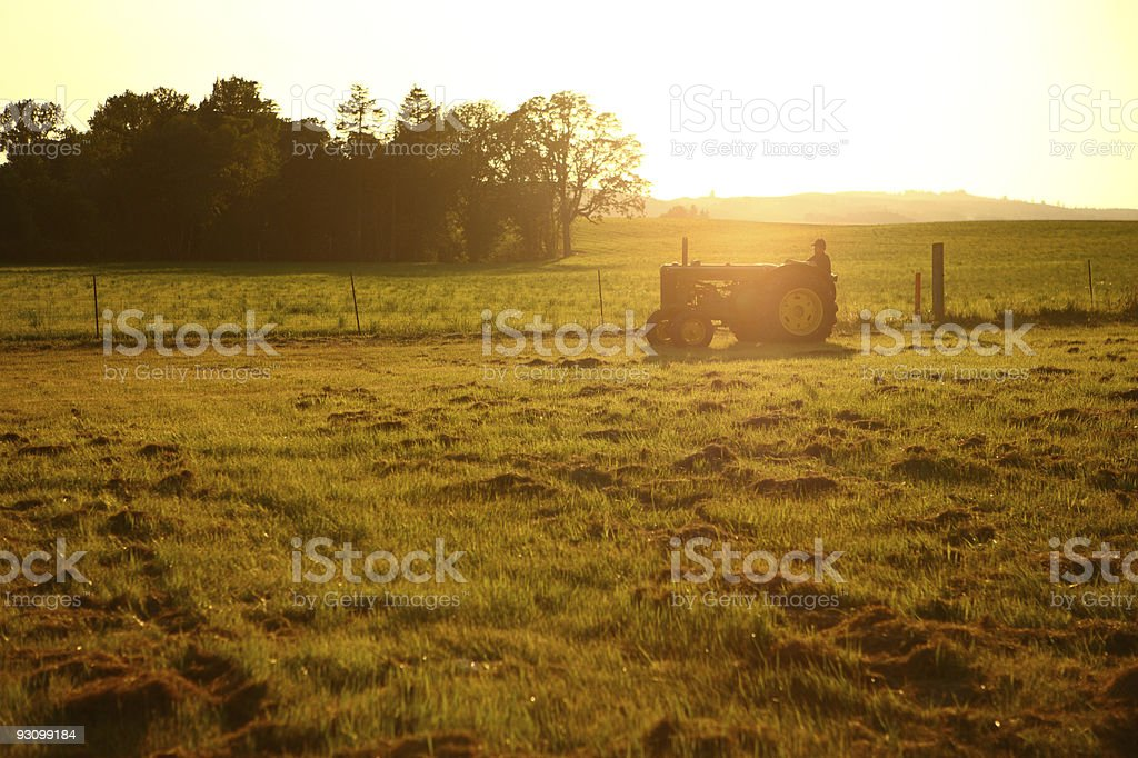 Farmer driving tractor in field at sunset stock photo