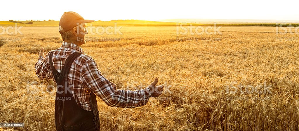 Farmer enjoying successful harvest - copy space stock photo