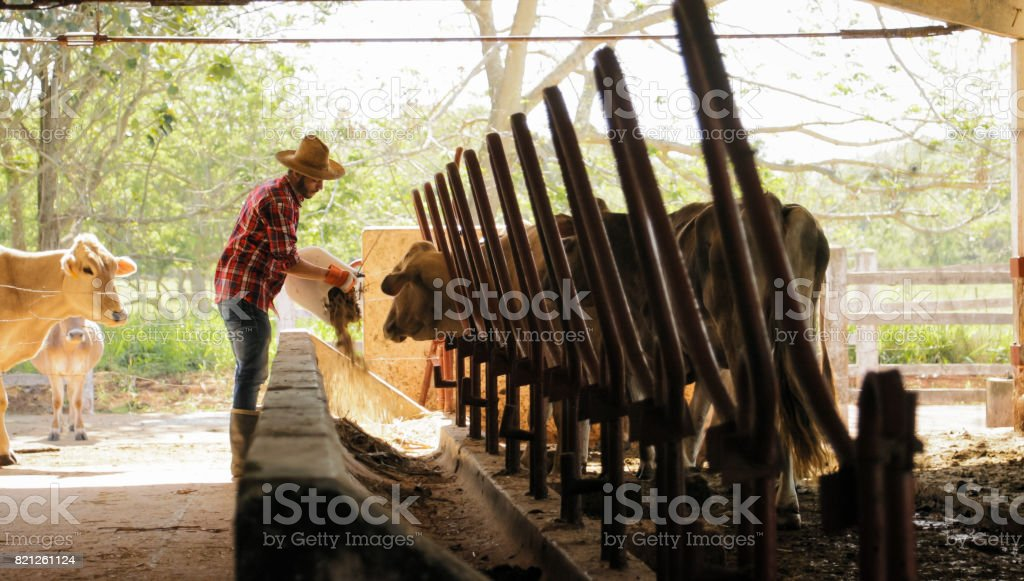Farmer Feeding Animals Peasant Man At Work In Farm stock photo
