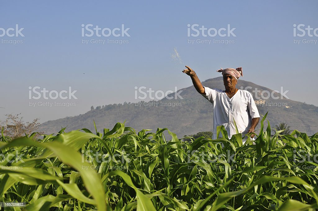 Farmer fertilizing his corn field near the mountains stock photo