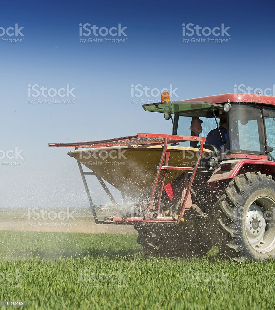Farmer fertilizing wheat field with nitrogen, phosphorus, potassium fertilizer stock photo