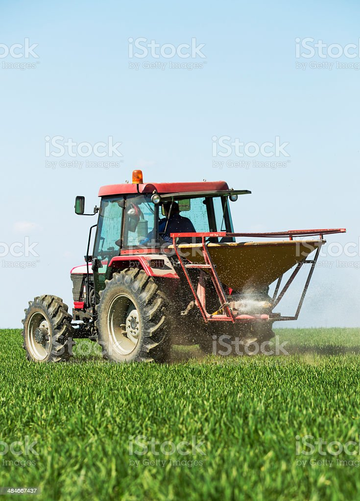 Farmer fertilizing wheat field with nitrogen stock photo
