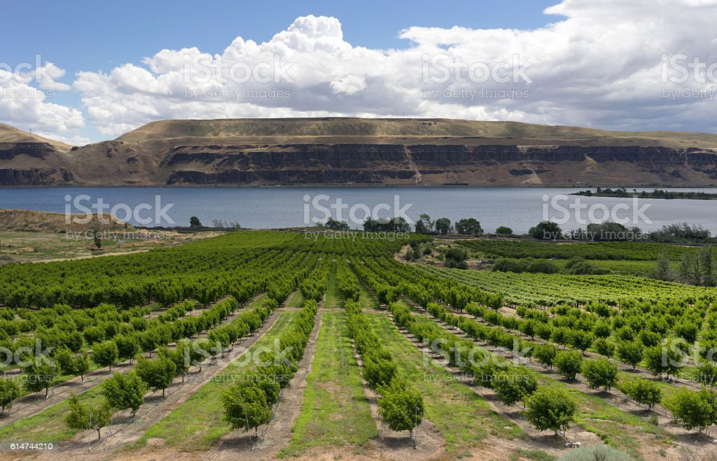 Farmer Fields Orchards Fruit Trees Columbia River Gorge stock photo