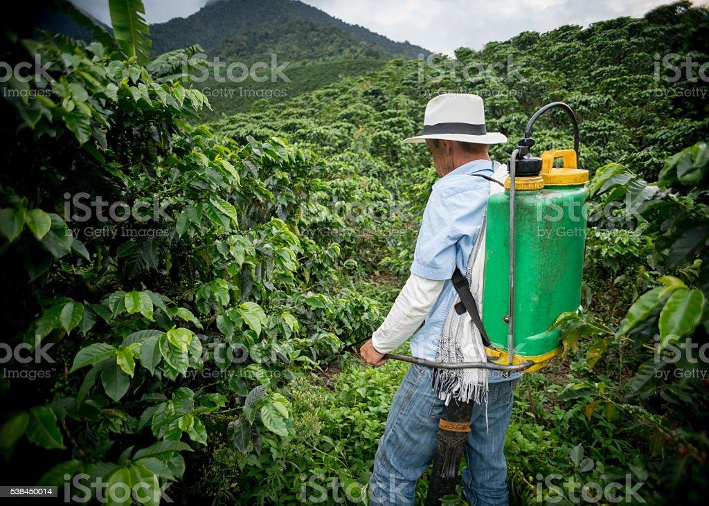 Farmer fumigating a coffee crop stock photo