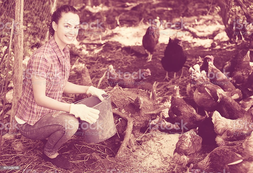 Farmer giving feeding stuff to chickens stock photo