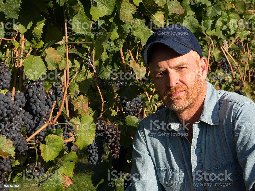 Farmer, Grape, and Wine Making stock photo