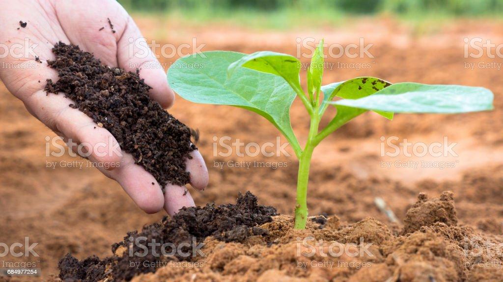 Farmer hand giving plant organic humus fertilizer to plant stock photo