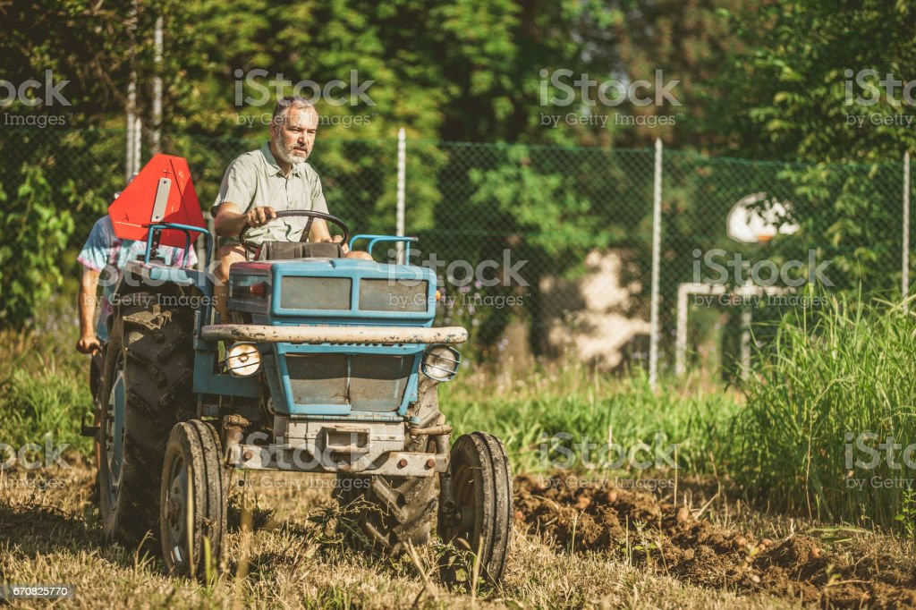 Farmer Harvesting Potato With Tractor stock photo