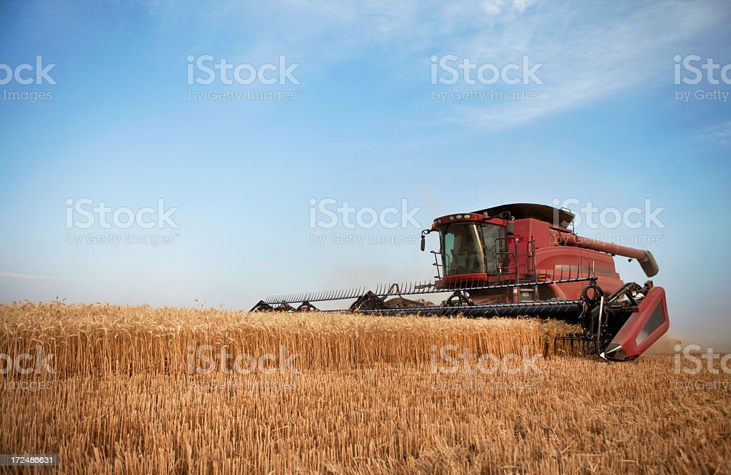 Farmer Harvesting Wheat in The Western United States. royalty-free stock photo
