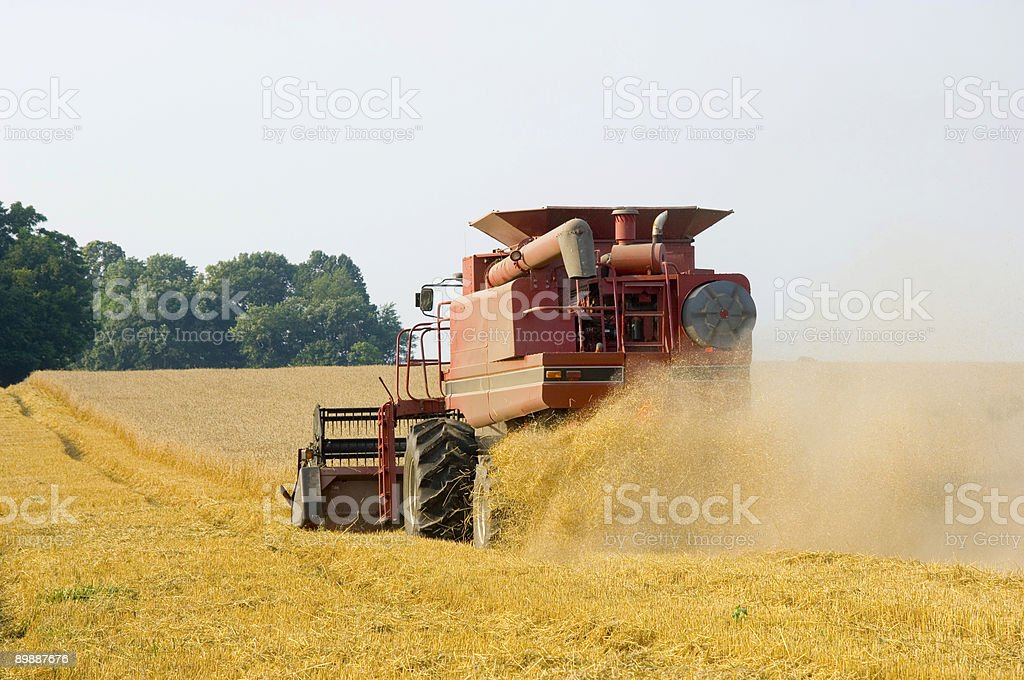 Farmer harvesting wheat royalty-free stock photo