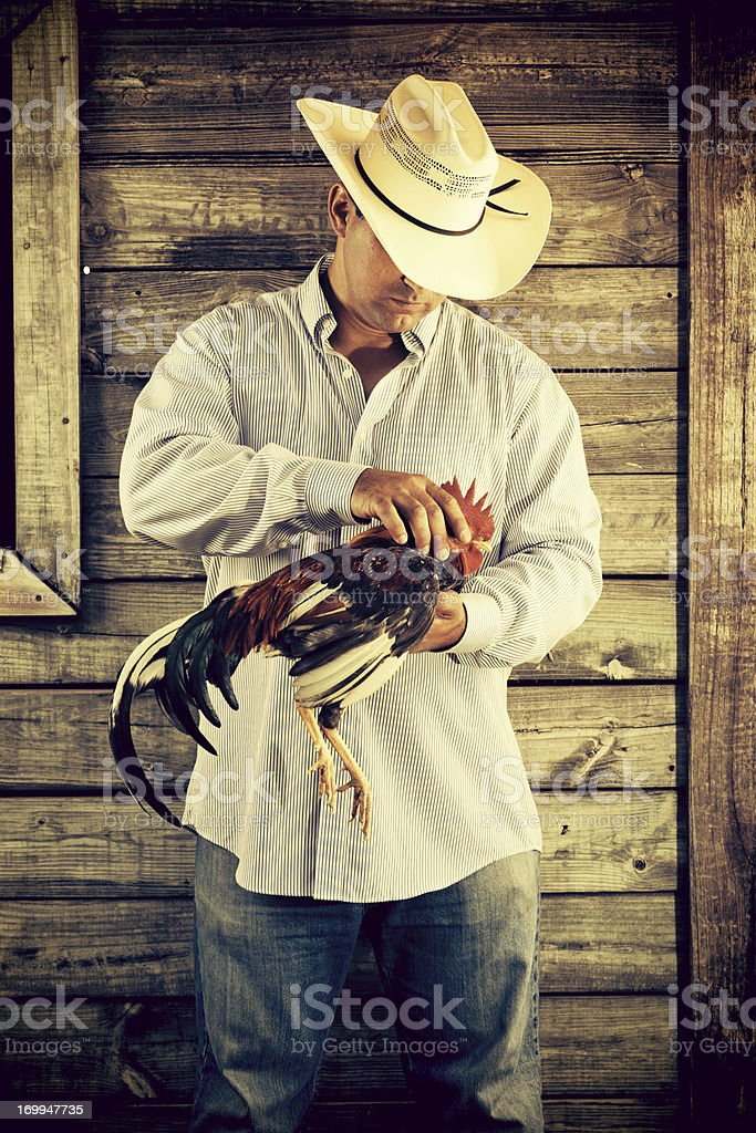 farmer holding a fighting rooster royalty-free stock photo