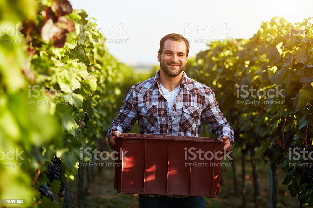 Farmer holding crate of grapes stock photo