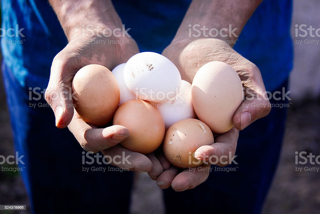 Farmer holding fresh eggs stock photo