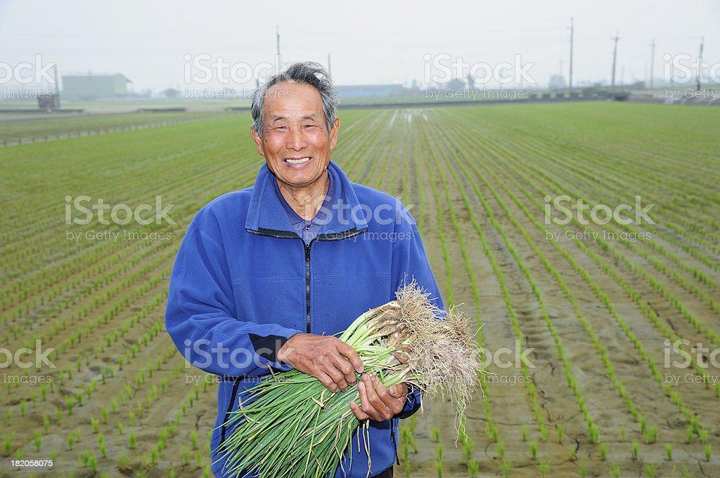 Farmer Holding Garlic Chives royalty-free stock photo