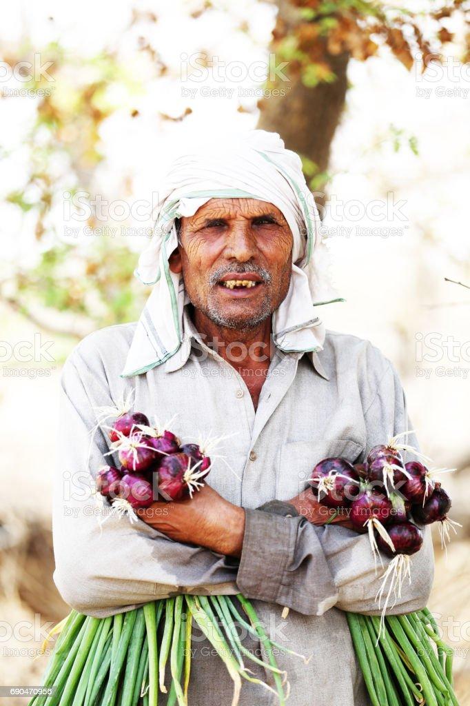 Farmer holding onion Vegetable stock photo