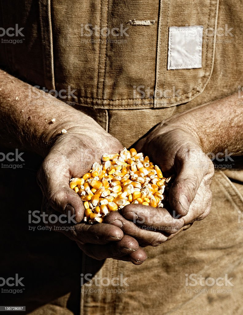Farmer Holding Seed Corn (sepia tint) stock photo
