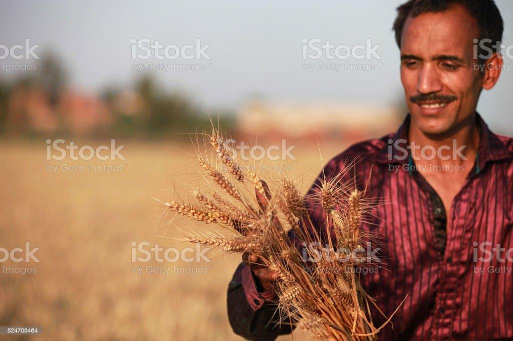 Farmer holding wheat stock photo