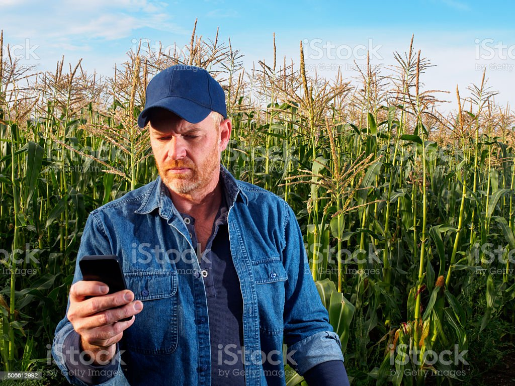 Farmer in a Cornfield using a Smart Phone for Communication stock photo