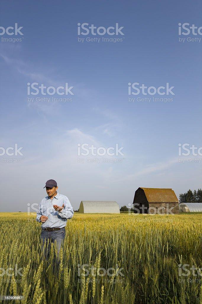 Farmer in a Green Field royalty-free stock photo