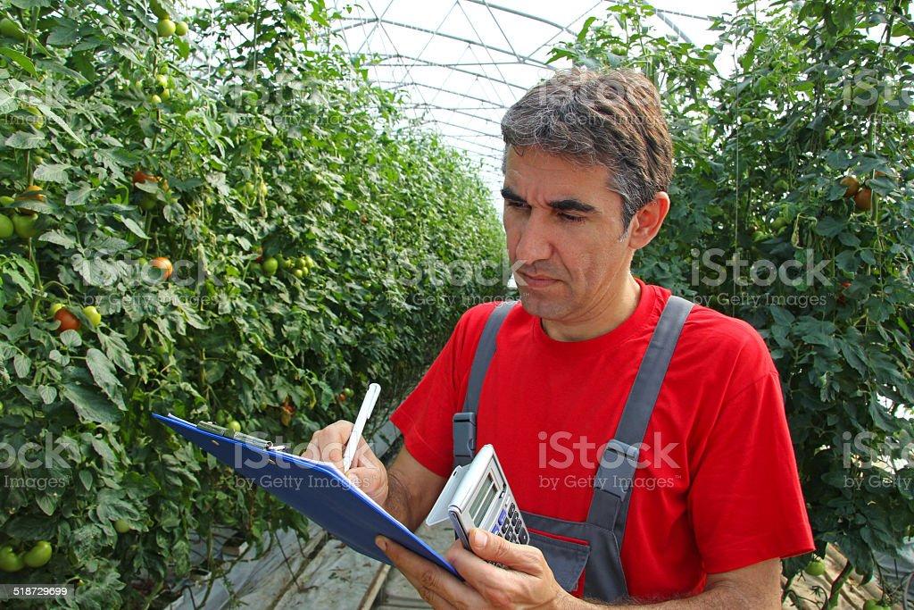 Farmer in a Greenhouse stock photo