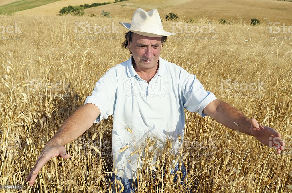 Farmer in a Wheat Field royalty-free stock photo