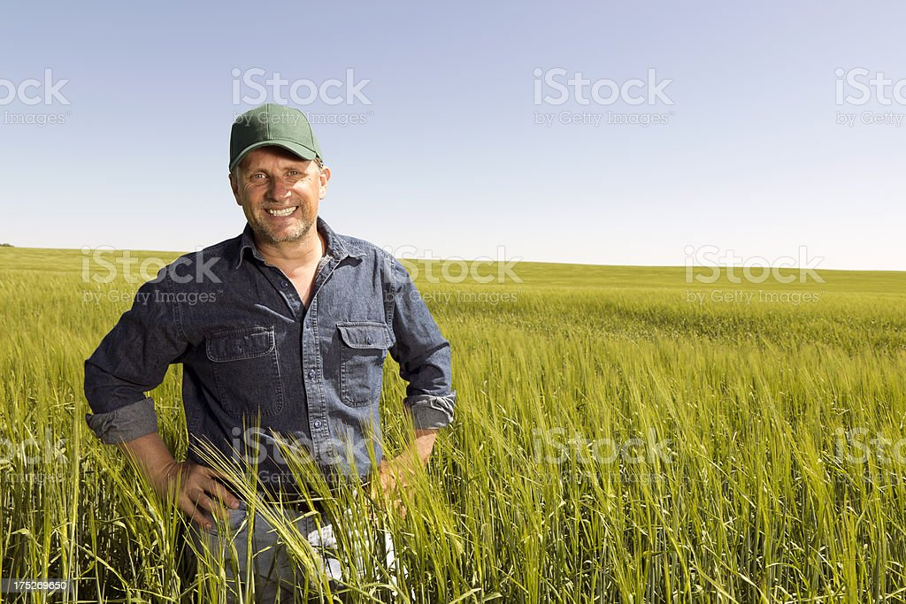 Farmer in a Wheatfield stock photo