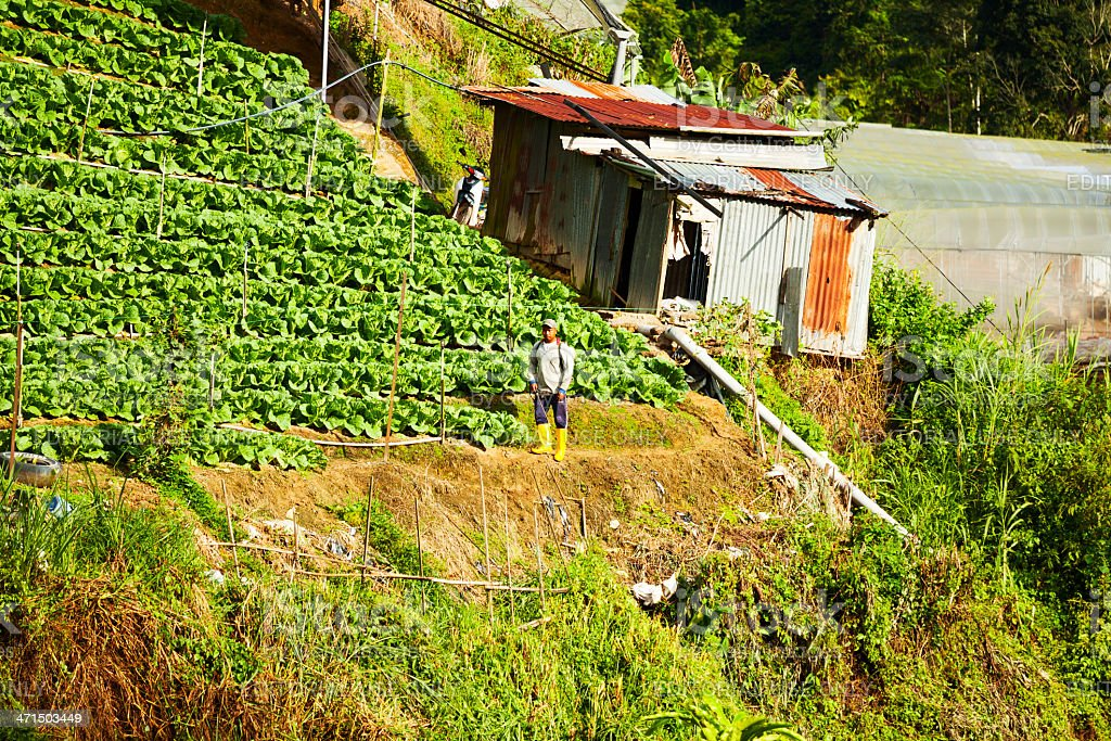 Farmer in Cameron Highlands royalty-free stock photo