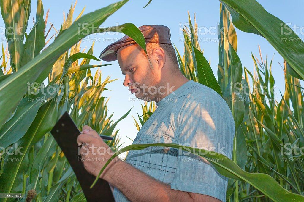 Farmer in Cornfield stock photo