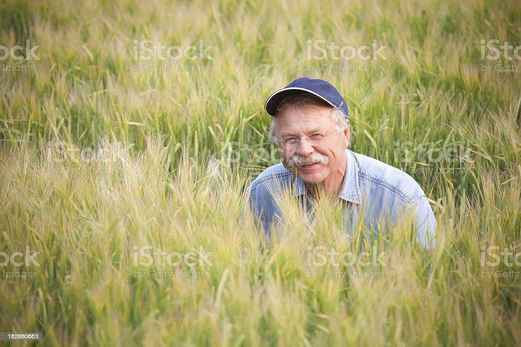 Farmer In crop royalty-free stock photo