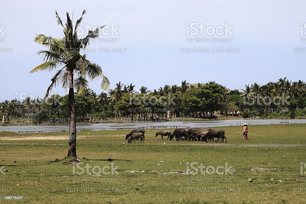 Farmer in Lombok Indonesia royalty-free stock photo