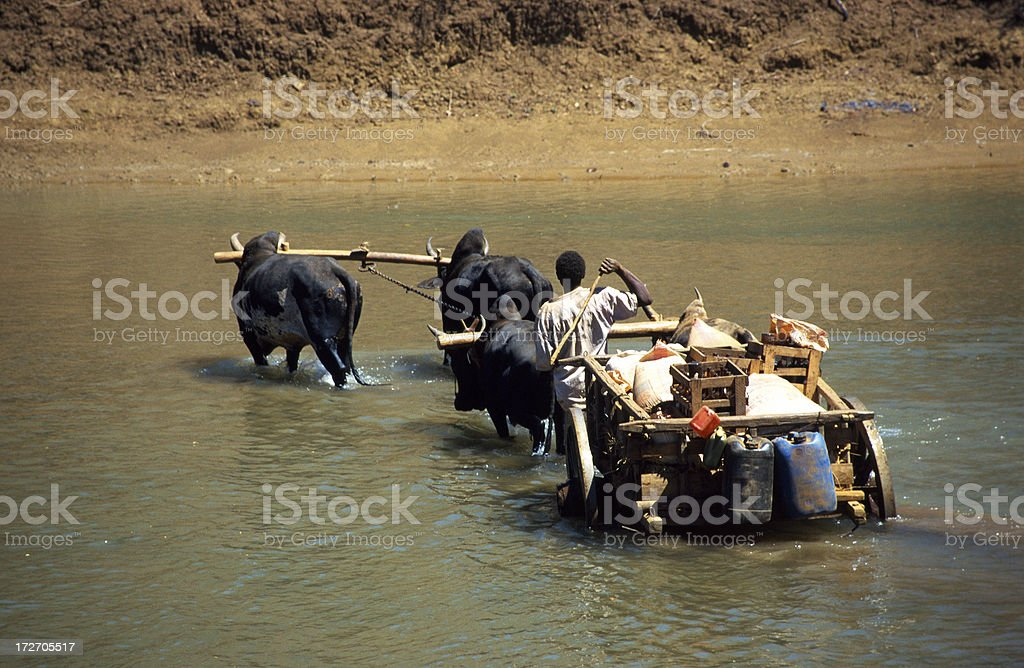 'Farmer in Madagascar, pushing wagon through a river' stock photo