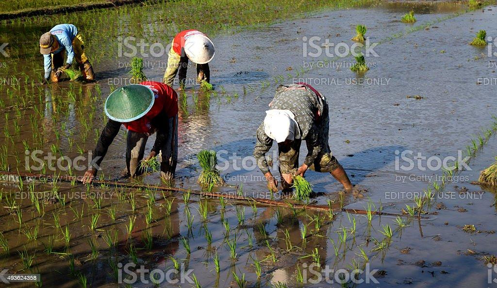 Farmer in Ponorogo Indonesia stock photo
