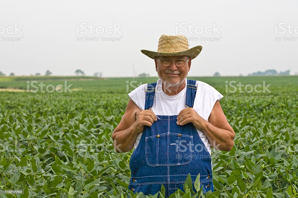 Farmer in Soybeans royalty-free stock photo