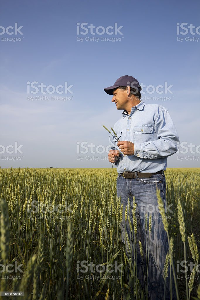 Farmer in the Field stock photo