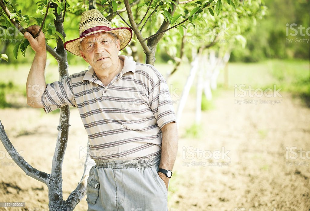 Farmer in the orchard royalty-free stock photo