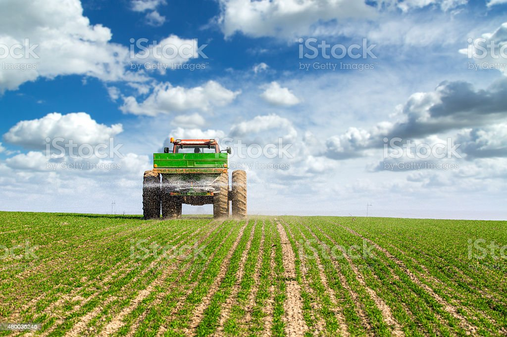 Farmer in tractor fertilizing wheat field at spring with npk stock photo