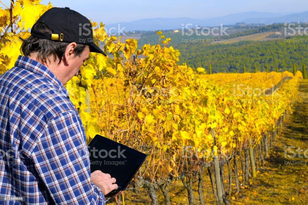Farmer in Tuscany Vineyard in Autumn stock photo