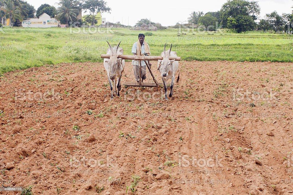 Farmer, India royalty-free stock photo