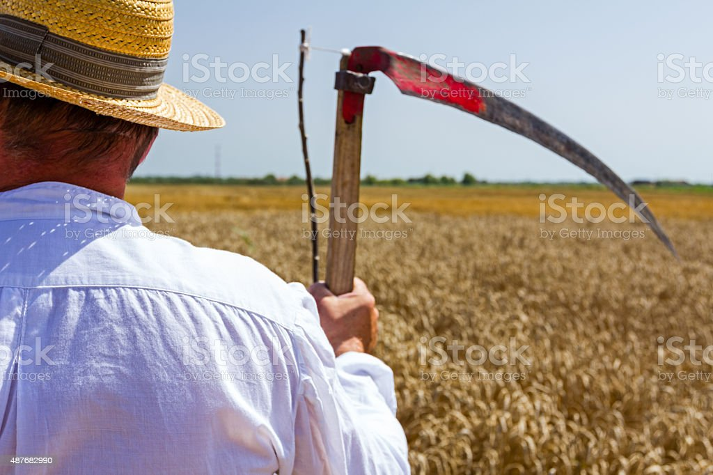 Farmer is looking at grain field. stock photo